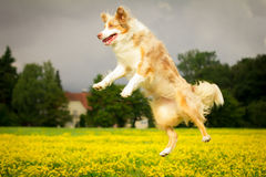 Hund in der Aktion stockfotos