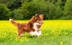 Hund in der Aktion stockbilder