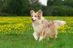 Hund in der Aktion lizenzfreie stockbilder