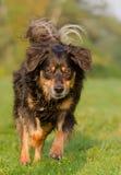 Hund in der Aktion stockfoto
