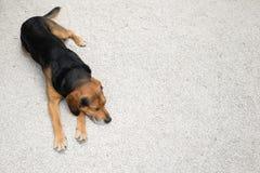 Hund, der allein aus den Grund schläft lizenzfreie stockbilder