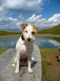 Hund in der alpinen Landschaft Stockbilder