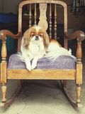 Hund, der alte Schule schaukelt Lizenzfreie Stockfotos