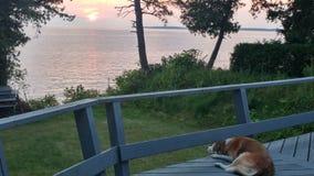 Hund, der Anfang des Sonnenuntergangs genießt stockfotografie