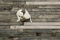 Hund, der auf alter hölzerner Flor stillsteht stockfoto