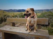 Hund, der auf Bank stillsteht Stockfotos