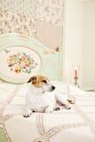 Hund, der auf Bett liegt Lizenzfreies Stockbild