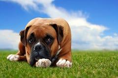 Hund, der auf das Gras legt Lizenzfreie Stockfotos