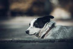 Hund, der auf dem Bürgersteig liegt Lizenzfreie Stockfotografie