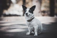Hund, der auf dem Bürgersteig sitzt Stockfotografie