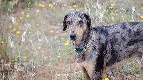 Hund, der auf dem Gebiet steht Lizenzfreies Stockfoto