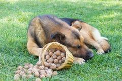 Hund, der auf dem Gras schläft lizenzfreie stockfotografie
