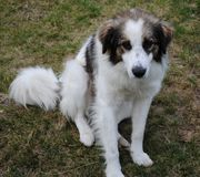 Hund, der auf dem Gras sitzt Lizenzfreies Stockbild