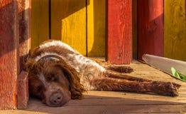 Hund, der auf dem Portal schläft stockfotos