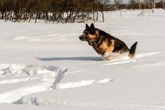 Hund, der auf dem Schnee läuft Stockfotos