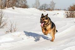 Hund, der auf dem Schnee läuft Stockbild