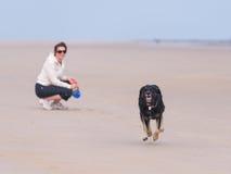Hund, der auf dem Strand läuft Lizenzfreie Stockfotografie