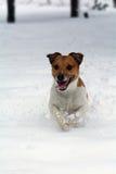 Hund, der auf dem tiefen Schnee läuft Lizenzfreie Stockfotos