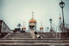 Hund, der auf den Schritten gegen die Kirche sitzt stockfotografie