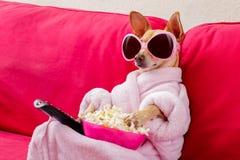 Hund, der auf der Couch fernsieht lizenzfreies stockfoto