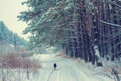 Hund, der auf der schneebedeckten Straße läuft Lizenzfreies Stockfoto