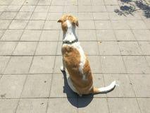 Hund, der auf der Straße mit Sonnenlicht sitzt Lizenzfreies Stockbild