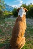 Hund, der auf die Straße wartet Stockfotos