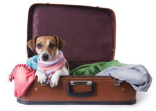 Hund, der auf eine Reise geht Lizenzfreies Stockfoto