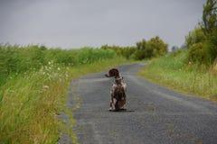 Hund, der auf eine Straße wartet Lizenzfreie Stockfotografie