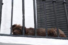 Hund, der auf einem Balkon liegt Lizenzfreie Stockfotografie