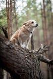 Hund, der auf einem Baum sitzt Stockbilder