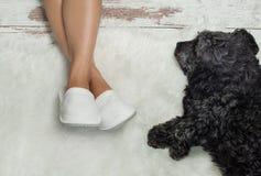 Hund, der auf einem Bretterboden nahe Pantoffeln liegt Gemütlich, warm, bequem stockfotos