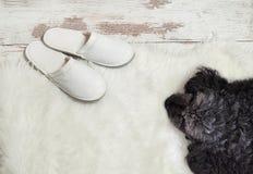 Hund, der auf einem Bretterboden nahe Pantoffeln liegt Gemütlich, warm, bequem lizenzfreie stockbilder
