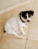 Hund, der auf einem selektiven Fokus der Fliese sitzt Stockfotografie