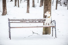 Hund, der auf einer Bank im Winter sitzt Stockfotografie