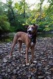 Hund, der auf Felsen durch den See steht stockfoto