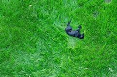 Hund, der auf grünem Gras schläft stockfotos