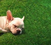 Hund, der auf grünem Gras schläft Lizenzfreie Stockfotos