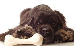 Hund, der auf Knochen kaut lizenzfreie stockbilder