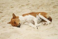 Hund, der auf Sand schläft Stockfoto