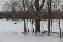 Hund, der auf Schnee im Winter geht Lizenzfreie Stockbilder