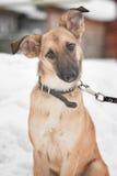 Hund, der auf Schnee sitzt Lizenzfreies Stockbild