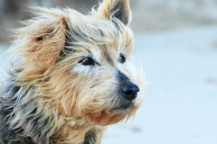 Hund, der auf seinen Eigentümer wartet. Stockfotografie