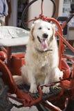 Hund, der auf Traktor sitzt lizenzfreies stockbild