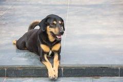 Hund, der auf Treppenhaus sitzt Lizenzfreies Stockfoto