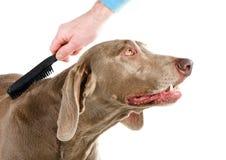 Hundepflegen lizenzfreie stockbilder