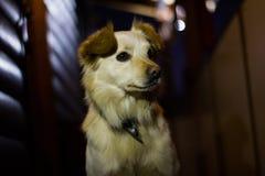 Hund, der aufmerksam schauen und Vertrauen Stockbilder