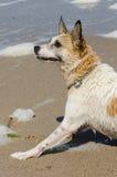 Hund, der Aufmerksamkeit zahlt stockfoto