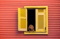 Hund, der aus Fenster heraus schaut Stockfotos