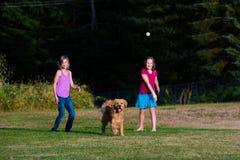 Hund, der Ball jagt Stockbild